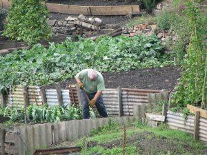 le jardinier débutant qui réussit son jardin